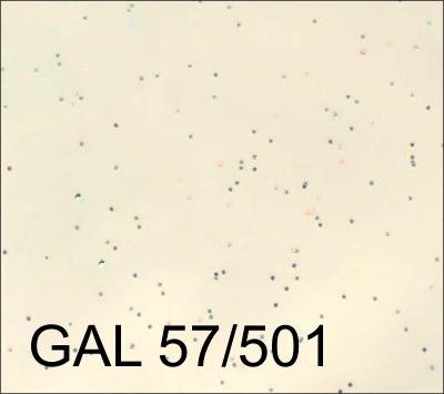 GAL 57-501
